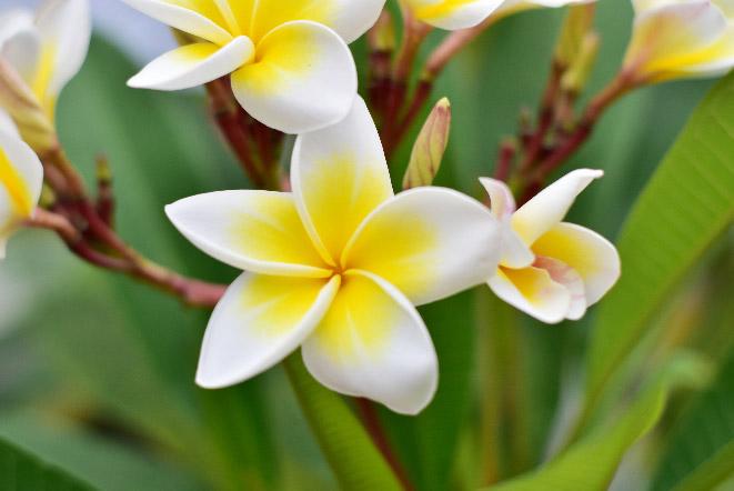 ジュプンカンボジアバリ