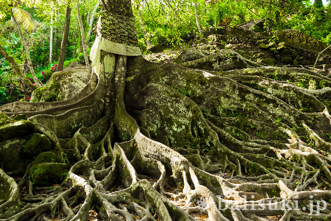 バリ島ゴアガジャ遺跡にある巨大な木の根